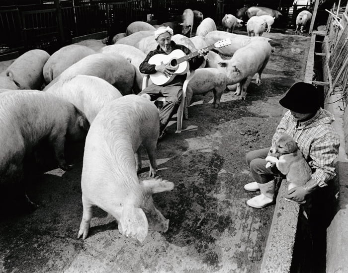 sweet-relationship-between-a-farmer-and-his-pigs_03