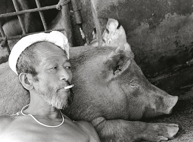 sweet-relationship-between-a-farmer-and-his-pigs_05