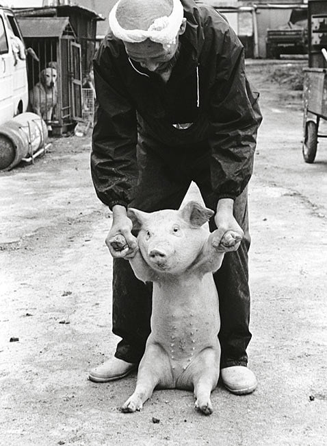 sweet-relationship-between-a-farmer-and-his-pigs_07