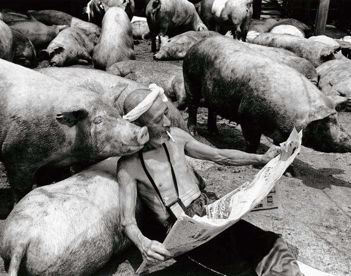 sweet-relationship-between-a-farmer-and-his-pigs_08