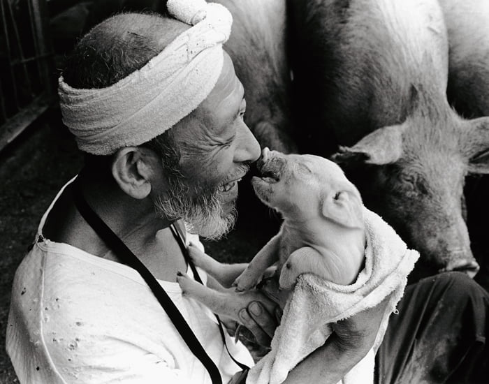 sweet-relationship-between-a-farmer-and-his-pigs_12